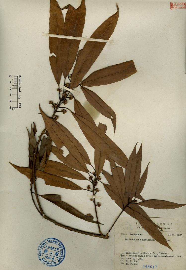 双子叶植物叶横切面结构简图