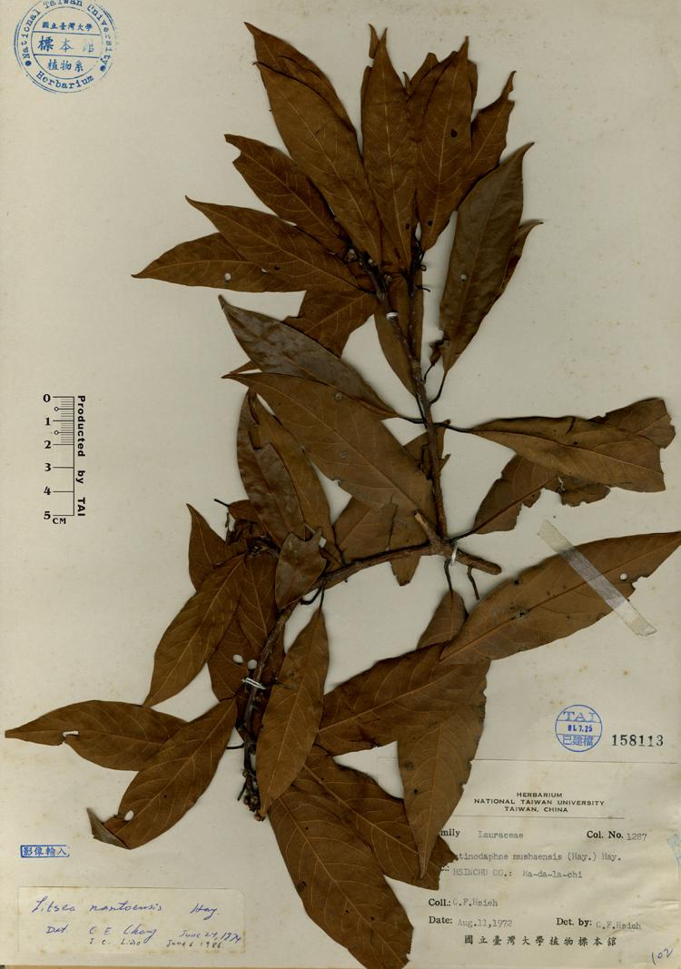 双子叶植物老根横切结构简图