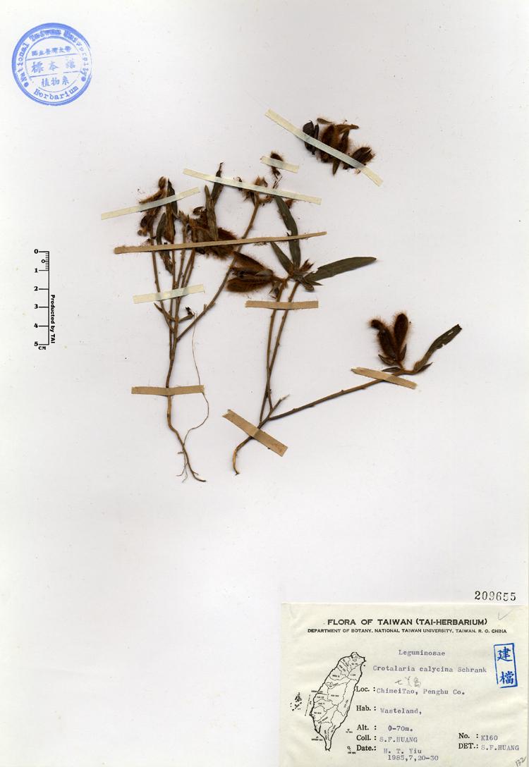 长萼野百合标本 馆号209655