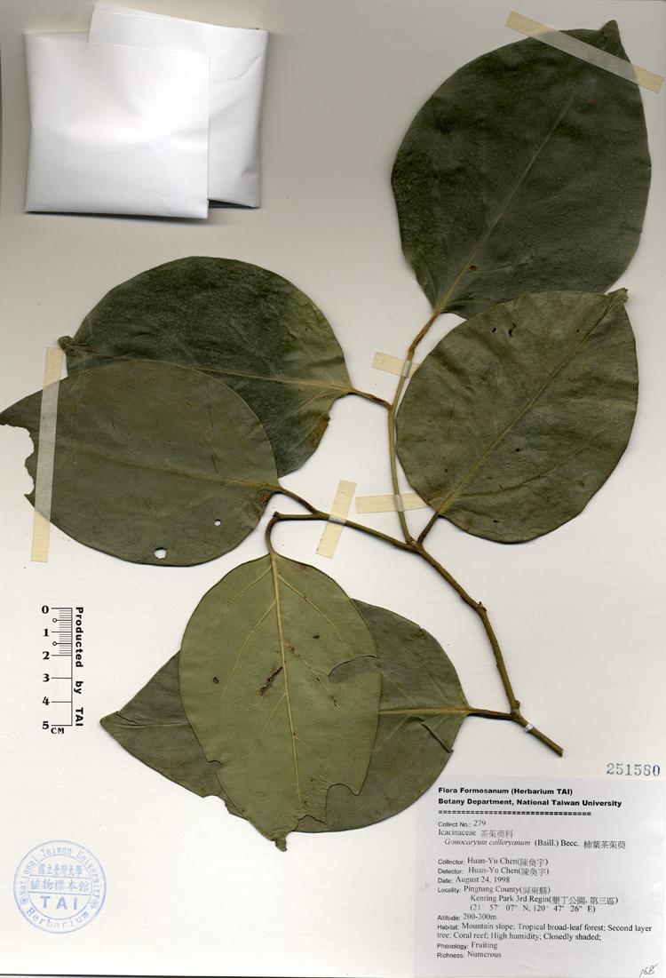 柿叶茶茱萸标本 馆号251580图片