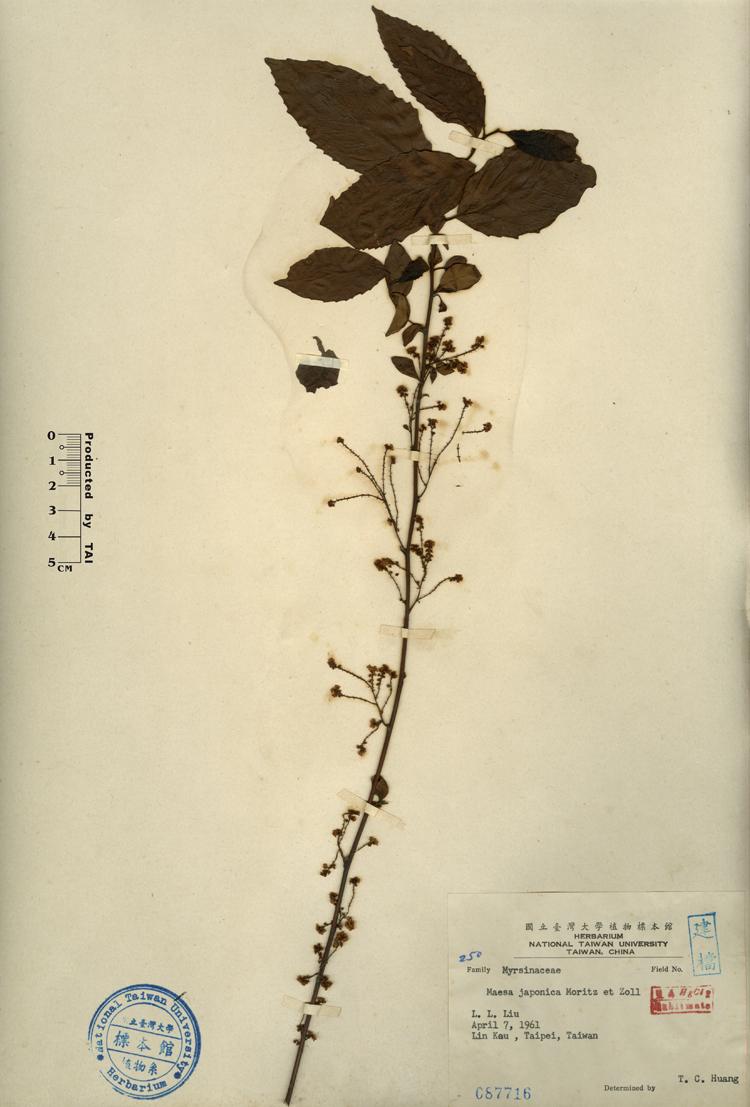桂花树林平面设计图