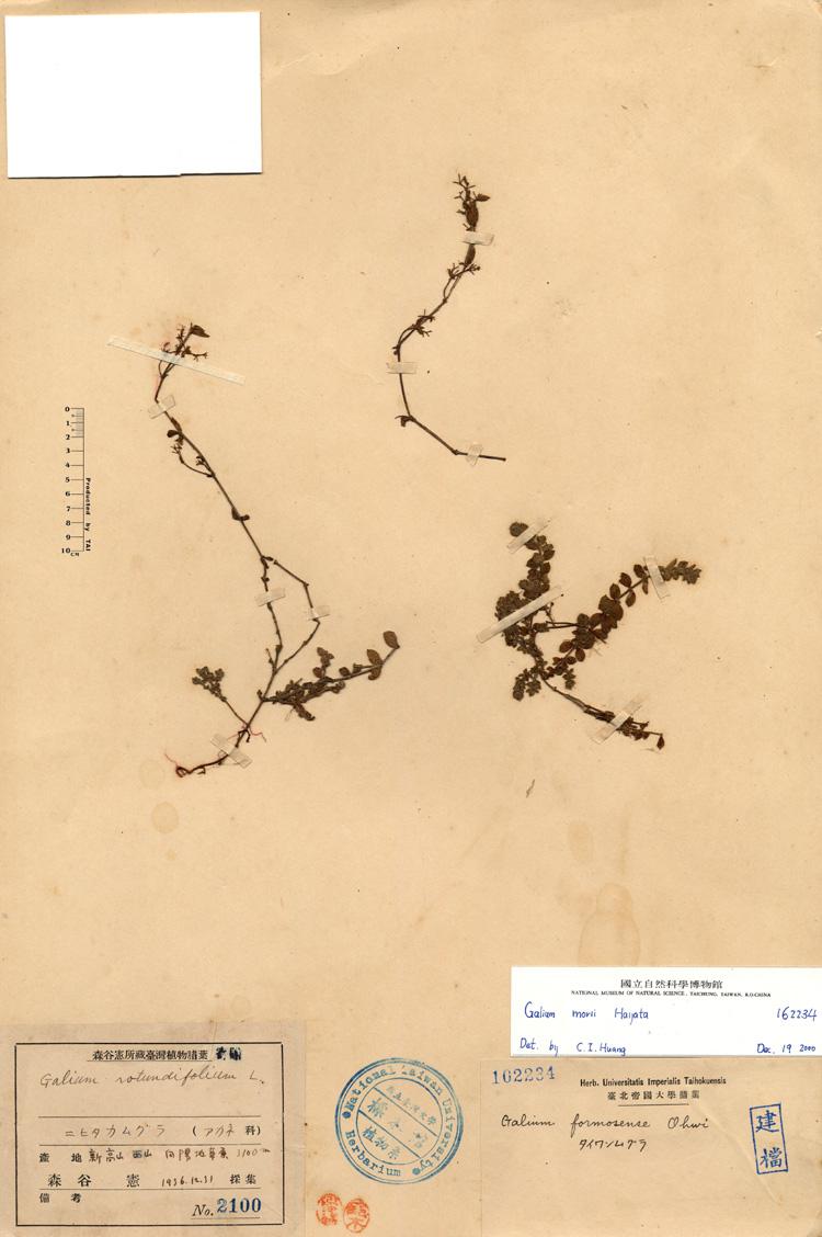 奋森氏螺旋体手绘图