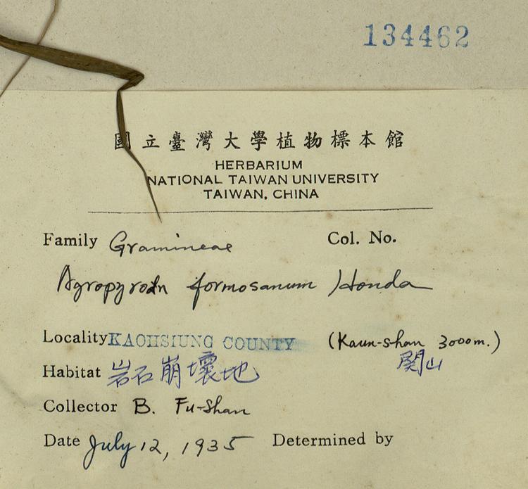 台湾鹅观草标本 馆号134462