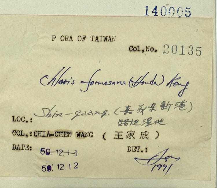 台湾虎尾草标本 馆号140005