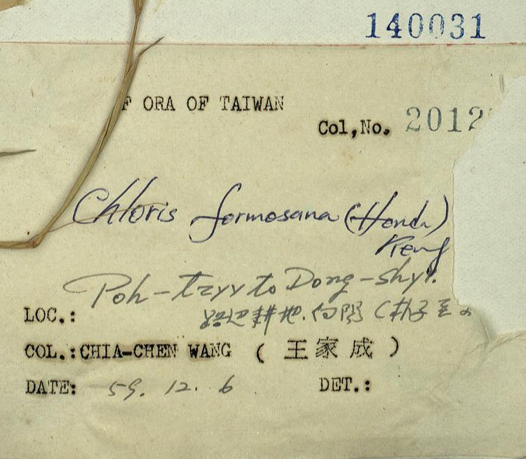 台湾虎尾草标本 馆号140031
