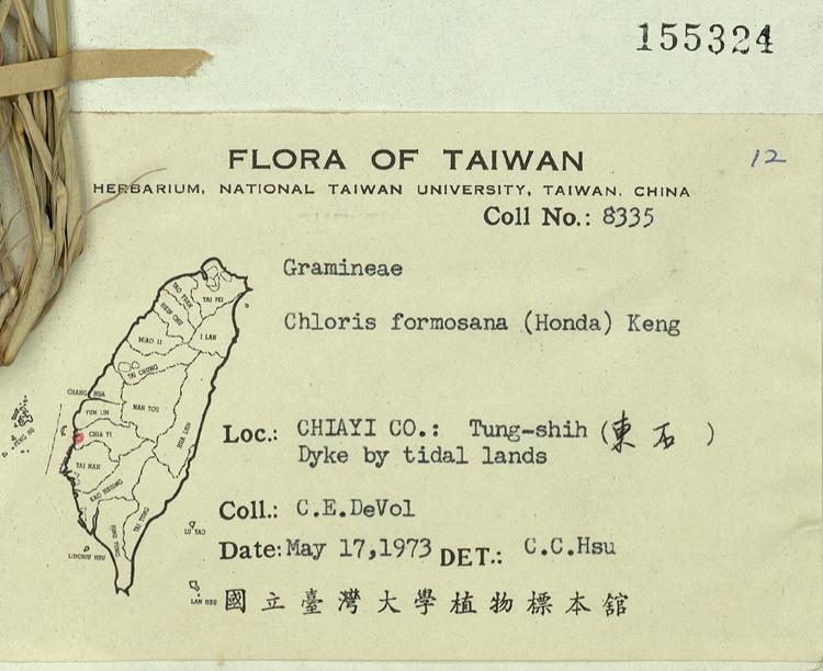台湾虎尾草标本 馆号155324