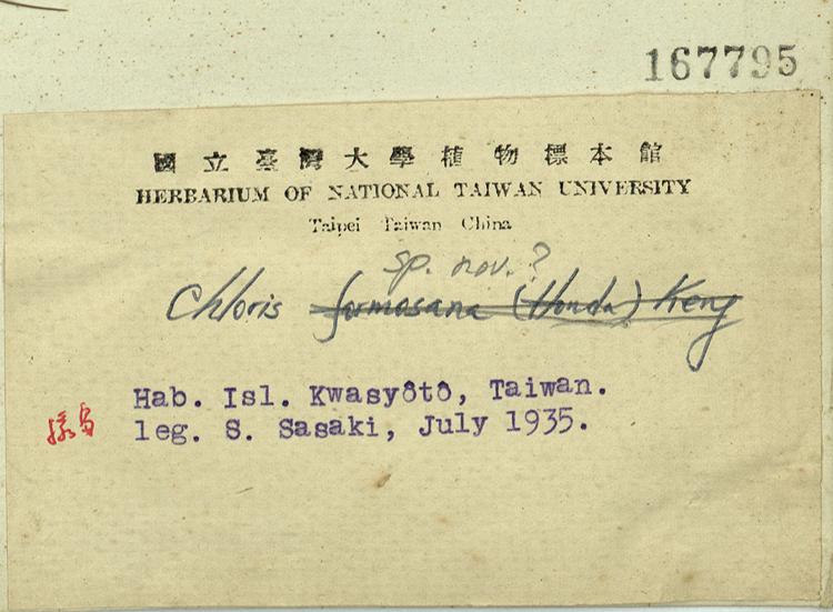 台湾虎尾草标本 馆号167795