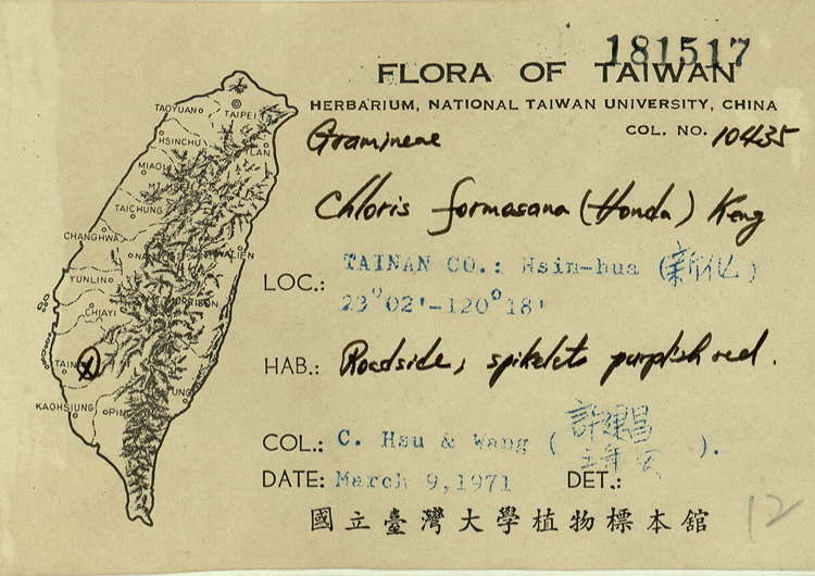 台湾虎尾草标本 馆号181517