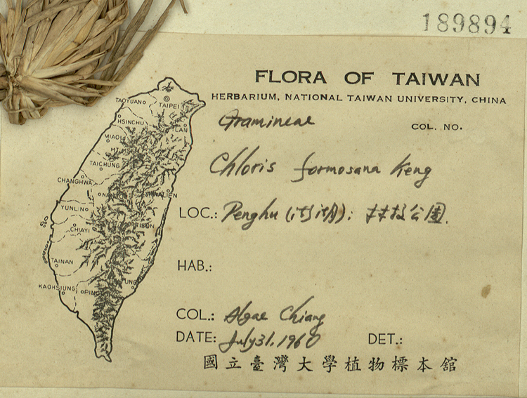 台湾虎尾草标本 馆号189894