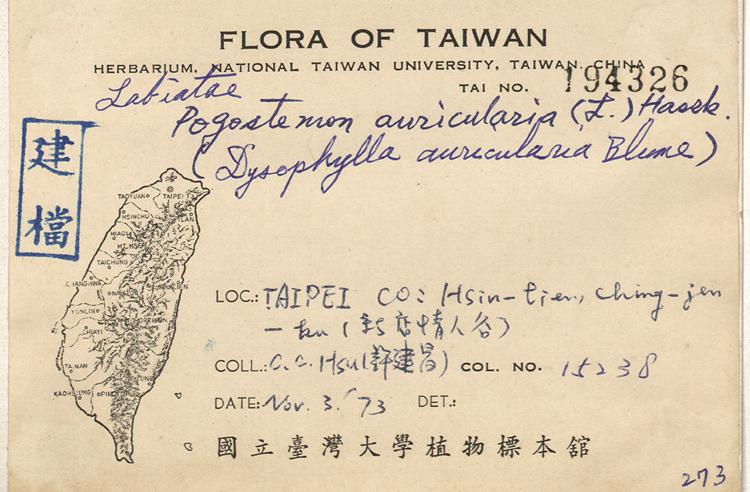 耳叶刺蕊草标本 馆号194326