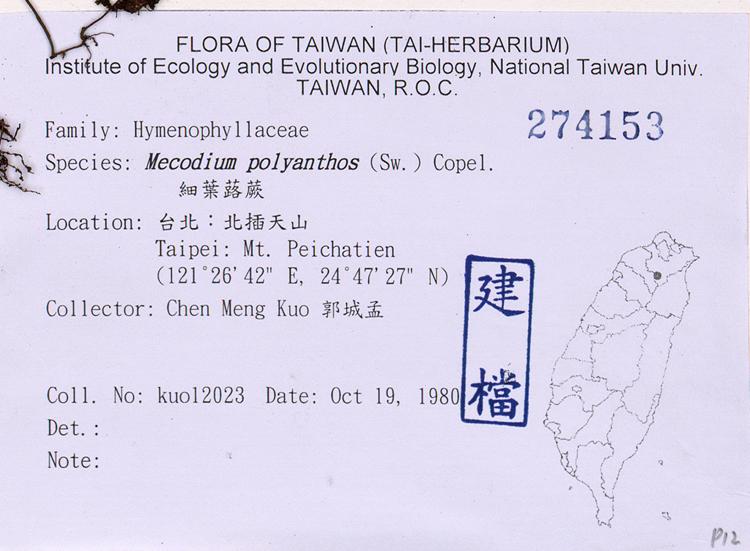 细叶蕗蕨标本 馆号274153 hymenophyllum polyanthos