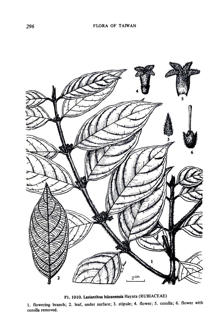 台湾植物志第一版