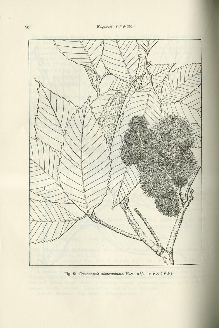 简单的树木素描怎么画